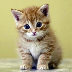 Маленький котенок.